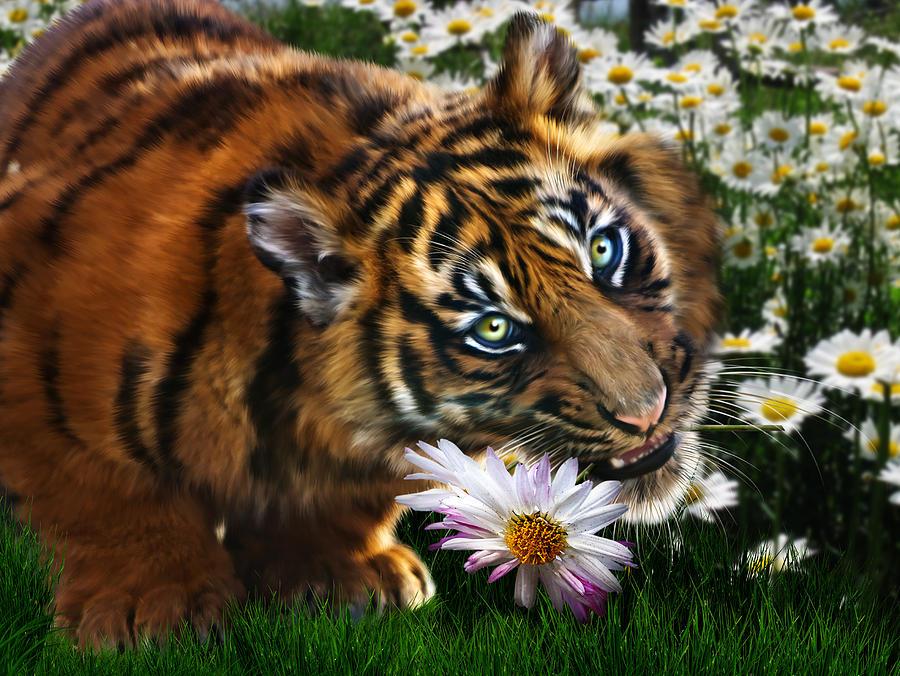 Нажмите на изображение для увеличения Название: tiger-flowers-julie-l-hoddinott.jpg Просмотров: 10 Размер:155,6 Кб ID:73857