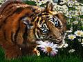 Нажмите на изображение для увеличения Название: tiger-flowers-julie-l-hoddinott.jpg Просмотров: 12 Размер:155,6 Кб ID:73857