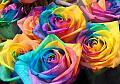 Нажмите на изображение для увеличения Название: радужные розы.jpg Просмотров: 8 Размер:92,3 Кб ID:74439