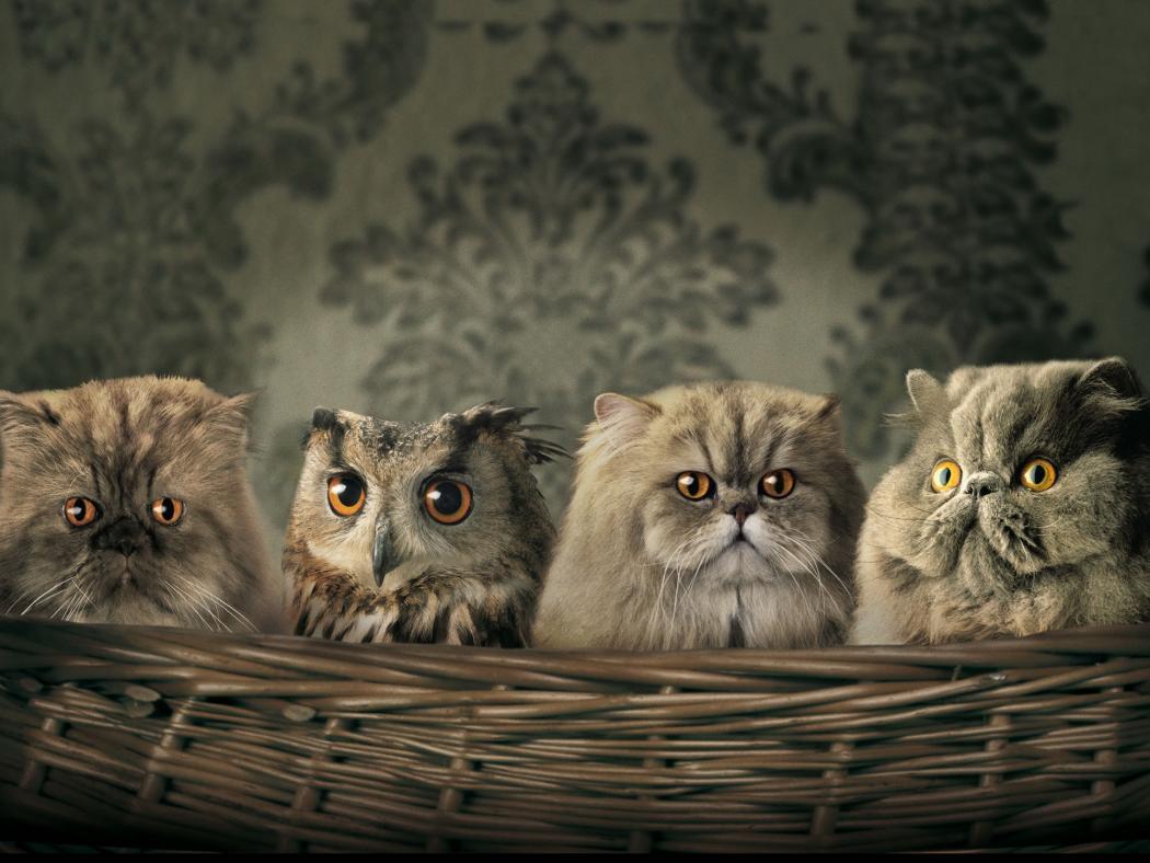 Нажмите на изображение для увеличения Название: сова и коты.jpg Просмотров: 26 Размер:97,1 Кб ID:74449