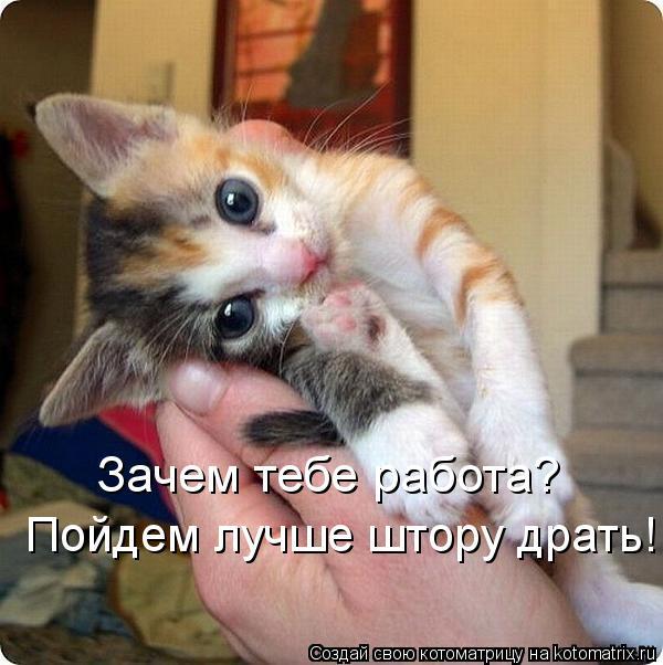 Нажмите на изображение для увеличения Название: kotomatritsa__-.jpg Просмотров: 17 Размер:54,8 Кб ID:74563