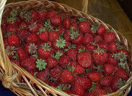 Нажмите на изображение для увеличения Название: ягода.jpg Просмотров: 4 Размер:13,6 Кб ID:74701