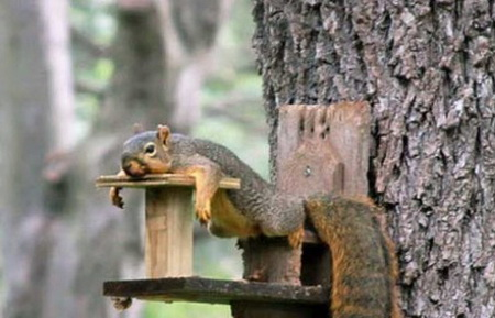 Нажмите на изображение для увеличения Название: 51562831_squirrels2d15.jpg Просмотров: 8 Размер:51,8 Кб ID:74782