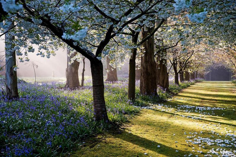 Нажмите на изображение для увеличения Название: 1-flowering-trees.jpg Просмотров: 10 Размер:144,2 Кб ID:74901