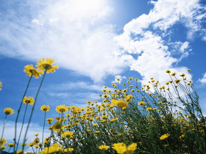 Нажмите на изображение для увеличения Название: beauty_flower_(42).jpg Просмотров: 5 Размер:111,2 Кб ID:75200