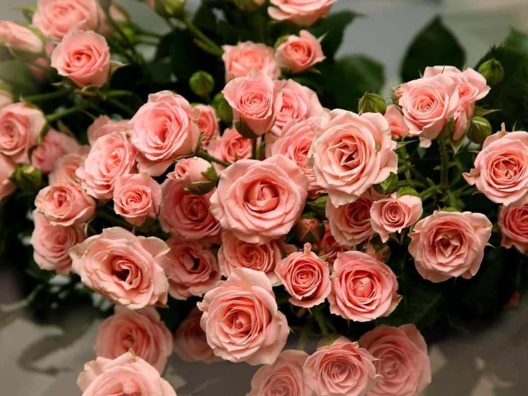Нажмите на изображение для увеличения Название: roses-flowers-bouquet-many-tender-leaves.jpg Просмотров: 6 Размер:118,6 Кб ID:75231