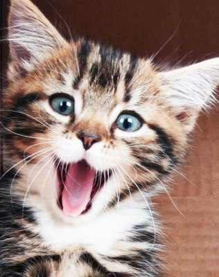 Нажмите на изображение для увеличения Название: котёнок.jpg Просмотров: 6 Размер:37,9 Кб ID:75859