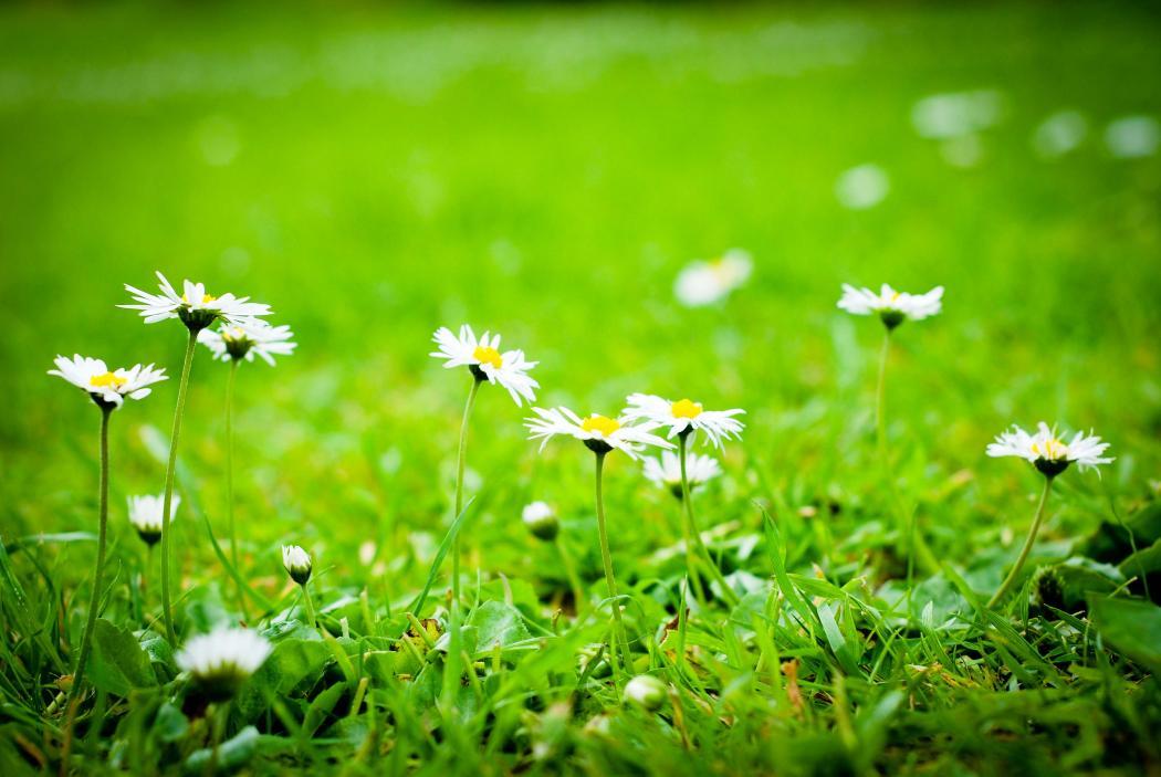 Нажмите на изображение для увеличения Название: lawn-9436.jpg Просмотров: 6 Размер:84,2 Кб ID:77063