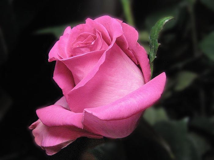 Нажмите на изображение для увеличения Название: нежно-розовая.jpg Просмотров: 10 Размер:71,1 Кб ID:78500