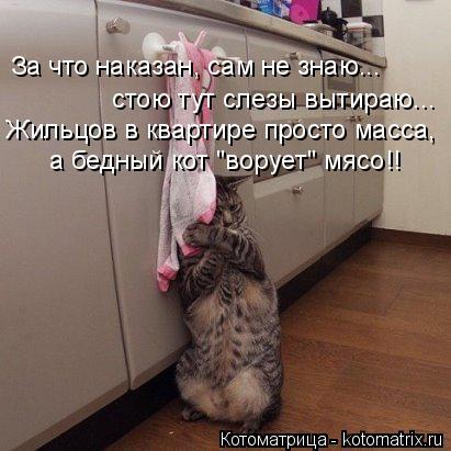 Нажмите на изображение для увеличения Название: kotomatritsa_D.jpg Просмотров: 43 Размер:33,6 Кб ID:79236