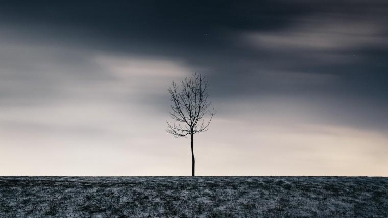Нажмите на изображение для увеличения Название: Одинокое-дерево-2.jpg Просмотров: 12 Размер:55,0 Кб ID:79493