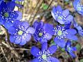 Нажмите на изображение для увеличения Название: Beautiful-flowers-of-spring_5.jpg Просмотров: 9 Размер:109,1 Кб ID:80866