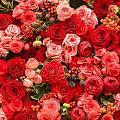 Нажмите на изображение для увеличения Название: depositphotos_12766634-stock-photo-abstract-background-of-flowers.jpg Просмотров: 8 Размер:61,6 Кб ID:82169