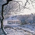Нажмите на изображение для увеличения Название: 3-1290508605-Dartmoor.jpg Просмотров: 18 Размер:142,8 Кб ID:84508